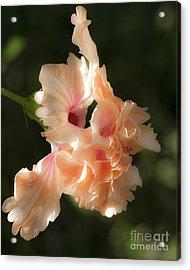 Peach Bliss Acrylic Print by Ken Frischkorn