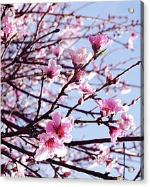 Peach Blossom Blowout Acrylic Print by DiDi Higginbotham