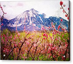 Peach Blossoms And Mount Lamborn II Acrylic Print