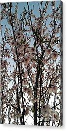 Peach Blossoms Acrylic Print by Diamante Lavendar