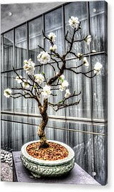 Peach Bonsai Tree Acrylic Print by Wade Brooks