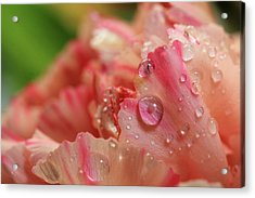 Peach And Pink Carnation Petals Acrylic Print