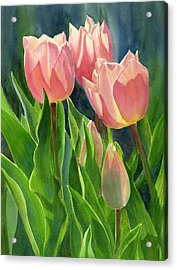Peach Colored Tulips With Buds Acrylic Print
