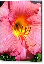 Peach Comotion Lily Acrylic Print by Cynthia Daniel