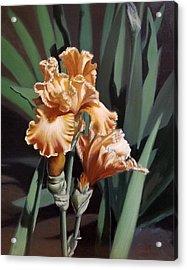 Peach Iris Acrylic Print
