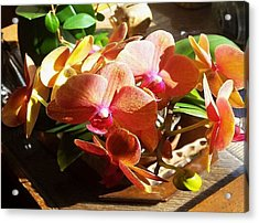 Peach Orchid Blossoms Acrylic Print
