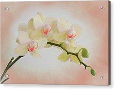 Peach Orchid Spray Acrylic Print