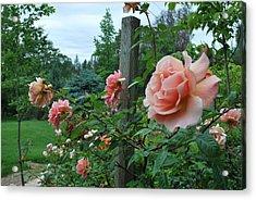 Peach Rose Acrylic Print by Linda Sramek