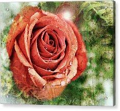 Peach Rose Acrylic Print by Sennie Pierson