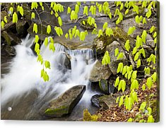 Peacham Brook Spring Acrylic Print