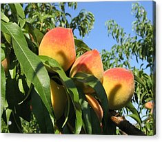 Peaches Acrylic Print by Barbara Yearty