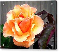 Peaches N' Cream Acrylic Print by Joyce Dickens
