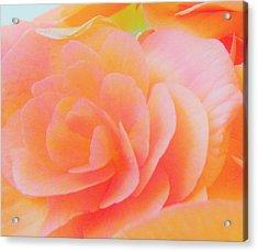 Peachy Perfection Acrylic Print