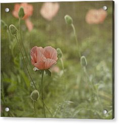 Peachy Poppies Acrylic Print by Rebecca Cozart
