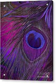 Peacock Candy Purple  Acrylic Print