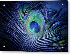 Acrylic Print featuring the photograph Peacock Feather Blush by Sharon Mau