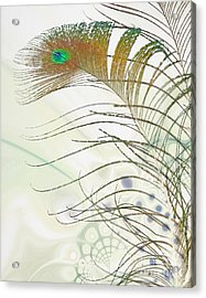 Peacock Feather Acrylic Print by Jan Piller