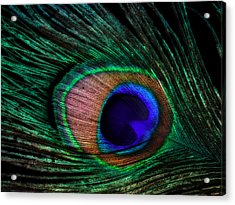 Peacock Feather Acrylic Print by June Marie Sobrito