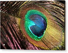 Acrylic Print featuring the photograph Peacock Feather by Terri Thompson