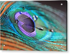 Peacock Feather With Water Drops Acrylic Print by Angela Murdock