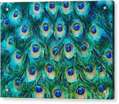 Peacock Feathers Acrylic Print by Nikki Marie Smith