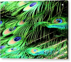 Peacock Feathers Acrylic Print by Toon De Zwart