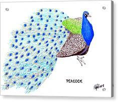 Peacock Acrylic Print by Frederic Kohli
