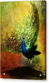 Peacock In Full Color Acrylic Print
