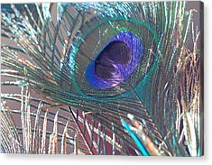 Acrylic Print featuring the photograph Peacock In Pastel by Angela Murdock