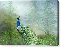 Acrylic Print featuring the photograph Peacock In The Forest by Bonnie Barry