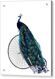 Peacock On A Bicycle, Home Decor Acrylic Print