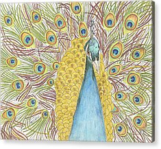 Acrylic Print featuring the drawing Peacock One by Arlene Crafton