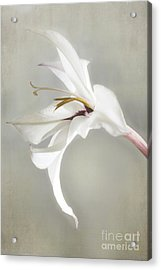 Peacock Orchid Acrylic Print