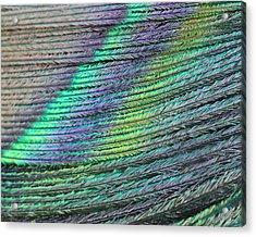 Peacock Stripes Acrylic Print