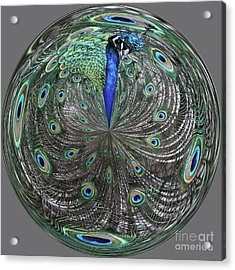 Peacock Swirl #2 Acrylic Print