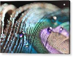 Peacock Swirls Acrylic Print