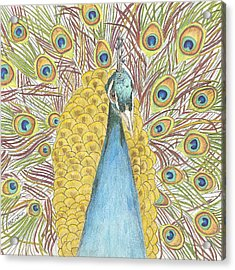Acrylic Print featuring the drawing Peacock Two by Arlene Crafton