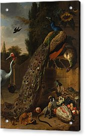 Acrylic Print featuring the painting Peacocks by Melchior d'Hondecoeter