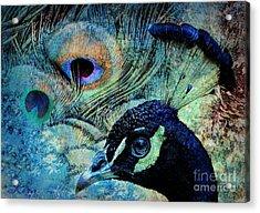 Peacocky Acrylic Print