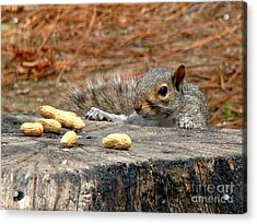 Acrylic Print featuring the photograph Peanut Surprise by Sue Melvin