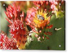 Pear Bee Acrylic Print
