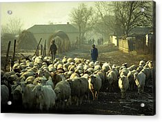 Peasants And Herd On The Village Path Acrylic Print