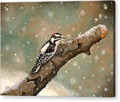 Pecking Through Rain Sleet And Snow Acrylic Print