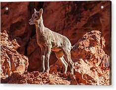 Pedestal Pose    Acrylic Print by James Marvin Phelps