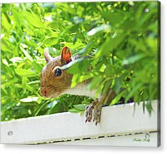 Peek-a-boo Gray Squirrel Acrylic Print by Kathy Kelly