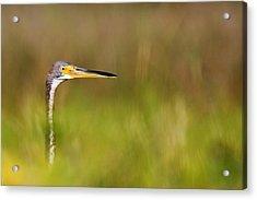 Acrylic Print featuring the photograph Peek-a-boo Birdie by Bob Decker