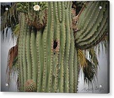 Peek-a-boo Cactus Wren Acrylic Print