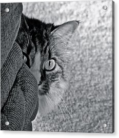 Peek A Boo Acrylic Print by Eve Spring