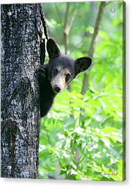 Acrylic Print featuring the photograph Peek-a-boo by Gerry Sibell