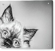 Peek A Boo Acrylic Print